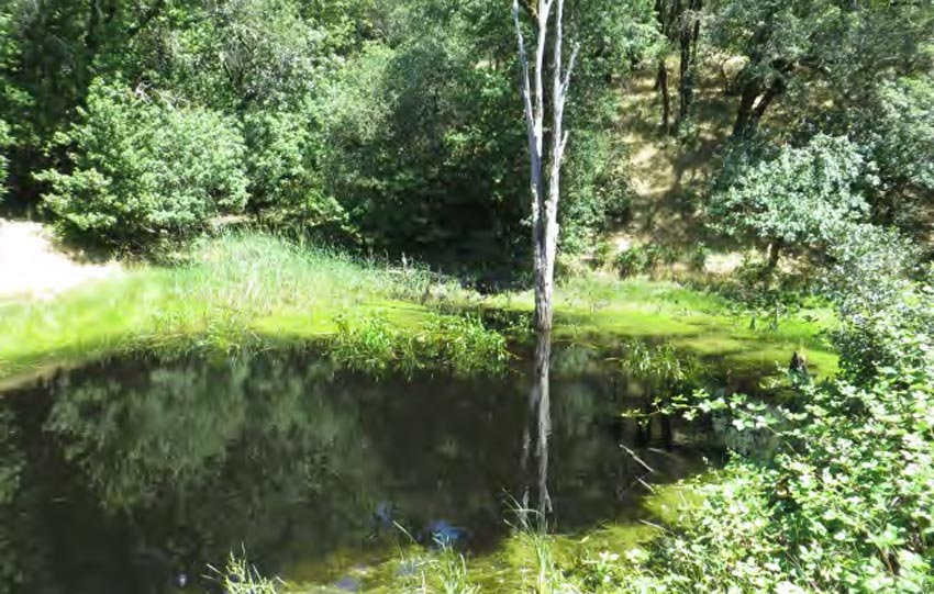 pond at the Healdsburg Ridge Open Space Preserve