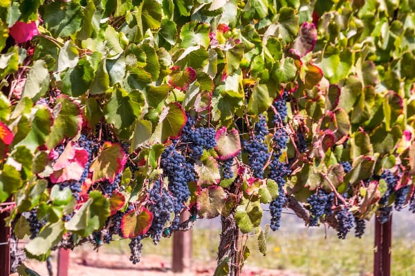 Sonoma County Specials and Packages